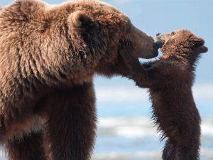 disney-bears-ap-review