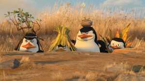 Penguins of Madasgar