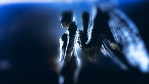 The_Flash_Hawkgirl1