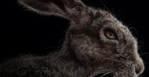 witch-hare1